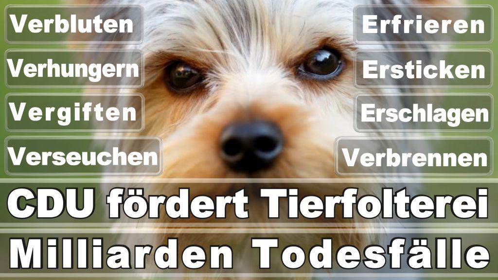 Angela Merkel CDU Tierversuche Tierquälerei Hauptschule Realschule Grundschule Gymnasium (10)