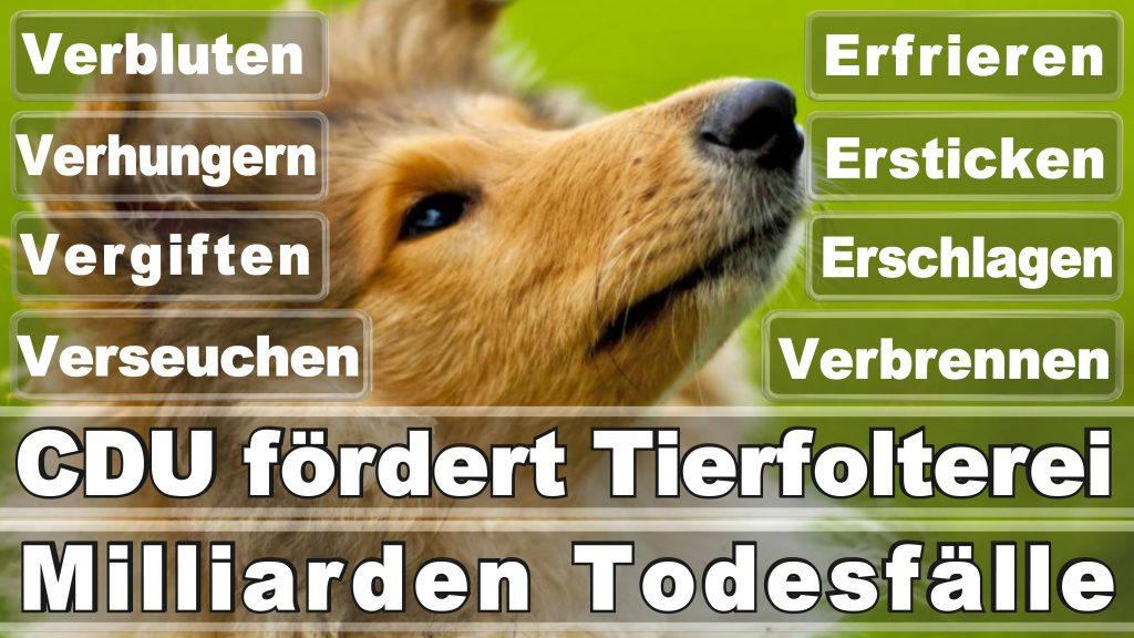 Angela Merkel CDU Tierversuche Tierquälerei Hauptschule Realschule Grundschule Gymnasium (11)