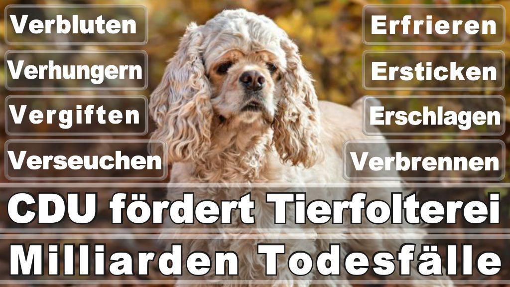 Bundestagswahl 2017 Umfrage Stimmzettel Angela Merkel CDU Tierversuche Tierquälerei Hauptschule Realschule Grundschule Gymnasium (19)