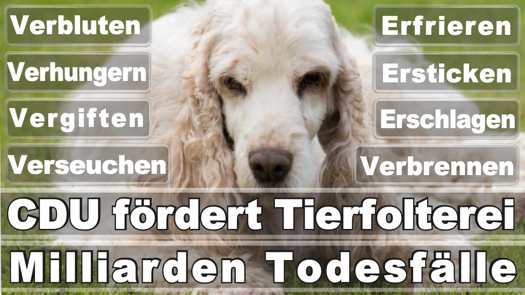 Bundestagswahl 2017 Umfrage Stimmzettel Angela Merkel CDU Tierversuche Tierquälerei Hauptschule Realschule Grundschule Gymnasium (28)