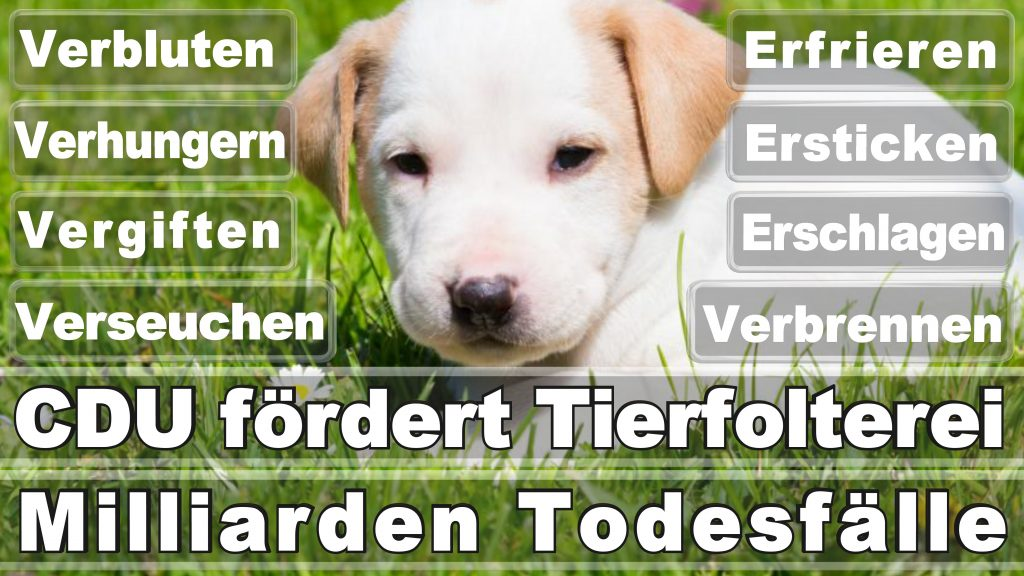 Angela Merkel CDU Tierversuche Tierquälerei Hauptschule Realschule Grundschule Gymnasium (29)