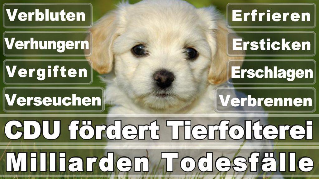 Angela Merkel CDU Tierversuche Tierquälerei Hauptschule Realschule Grundschule Gymnasium (35)