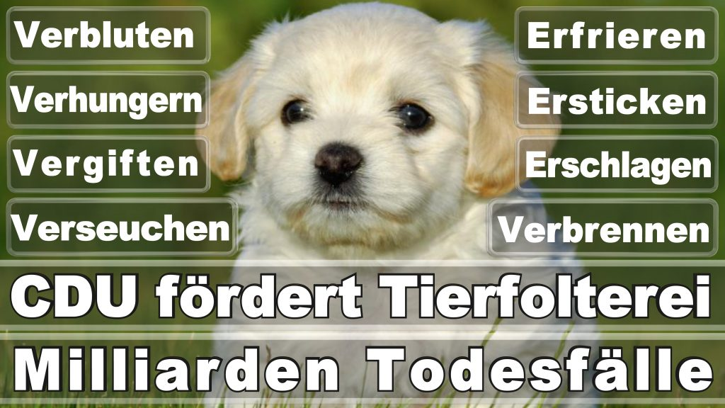 Angela Merkel CDU Tierversuche Tierquälerei Hauptschule Realschule Grundschule Gymnasium (36)