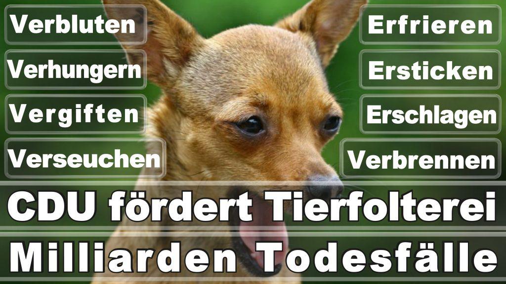 Angela Merkel CDU Tierversuche Tierquälerei Hauptschule Realschule Grundschule Gymnasium (38)