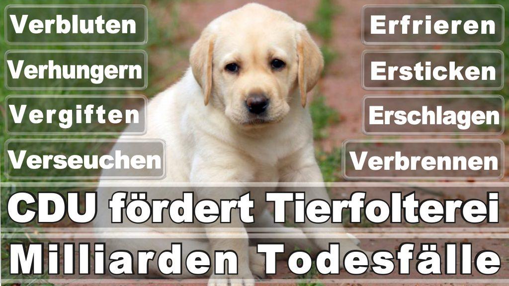 Bundestagswahl 2017 Umfrage Stimmzettel Angela Merkel CDU Tierversuche Tierquälerei Hauptschule Realschule Grundschule Gymnasium (4)