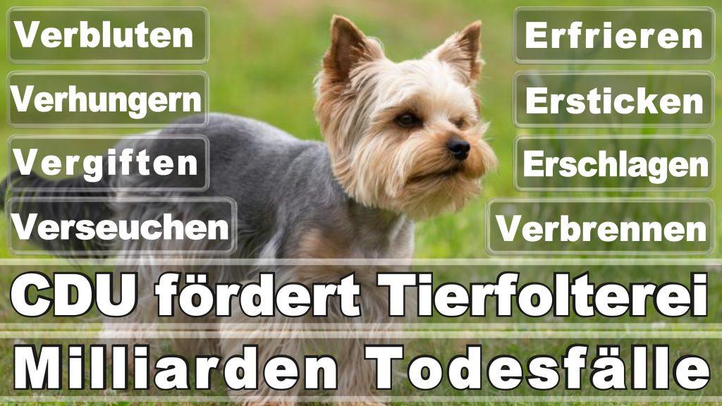 Angela Merkel CDU Tierversuche Tierquälerei Hauptschule Realschule Grundschule Gymnasium (41)