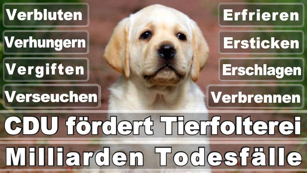 Angela Merkel CDU Tierversuche Tierquälerei Hauptschule Realschule Grundschule Gymnasium (42)