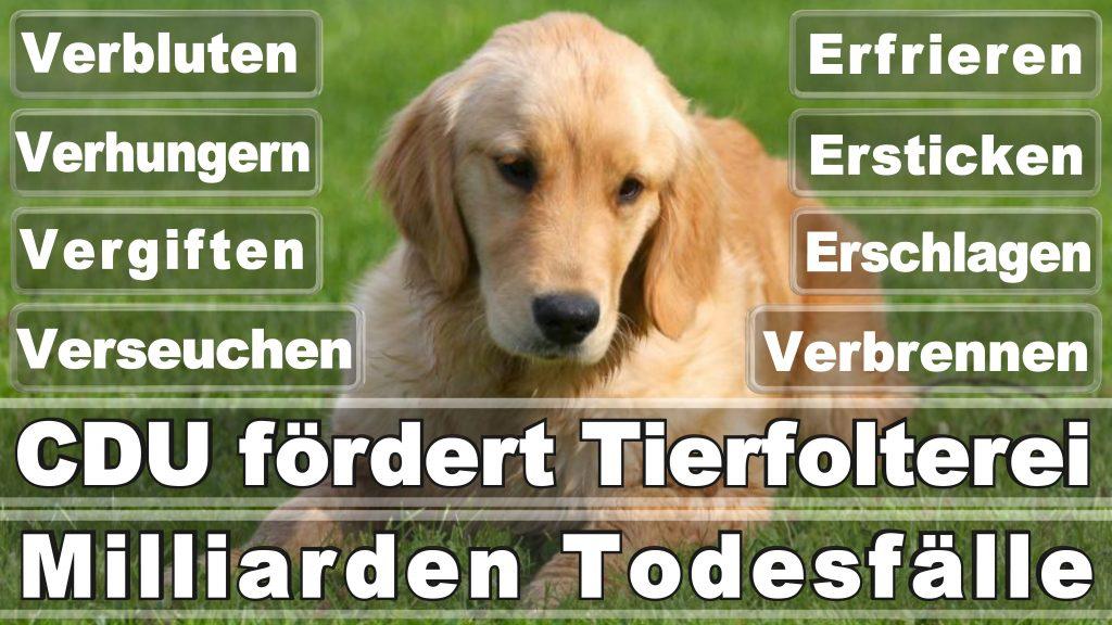 Bundestagswahl 2017 Umfrage Stimmzettel Angela Merkel CDU Tierversuche Tierquälerei Hauptschule Realschule Grundschule Gymnasium (44)