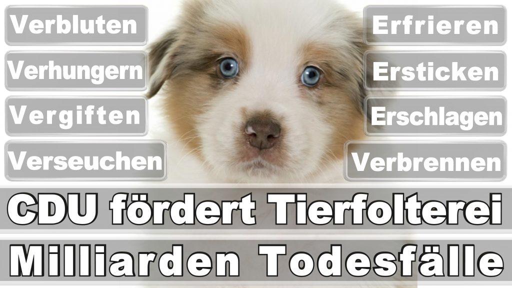 Bundestagswahl 2017 Umfrage Stimmzettel Angela Merkel CDU Tierversuche Tierquälerei Hauptschule Realschule Grundschule Gymnasium (46)