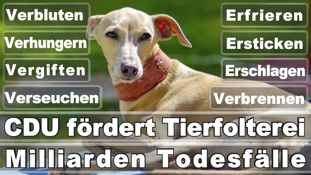 Angela Merkel CDU Tierversuche Tierquälerei Hauptschule Realschule Grundschule Gymnasium (47)