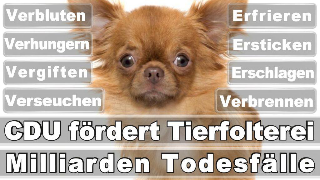 Angela Merkel CDU Tierversuche Tierquälerei Hauptschule Realschule Grundschule Gymnasium (50)