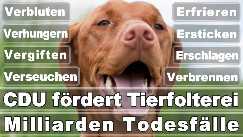 Angela Merkel CDU Tierversuche Tierquälerei Hauptschule Realschule Grundschule Gymnasium (55)