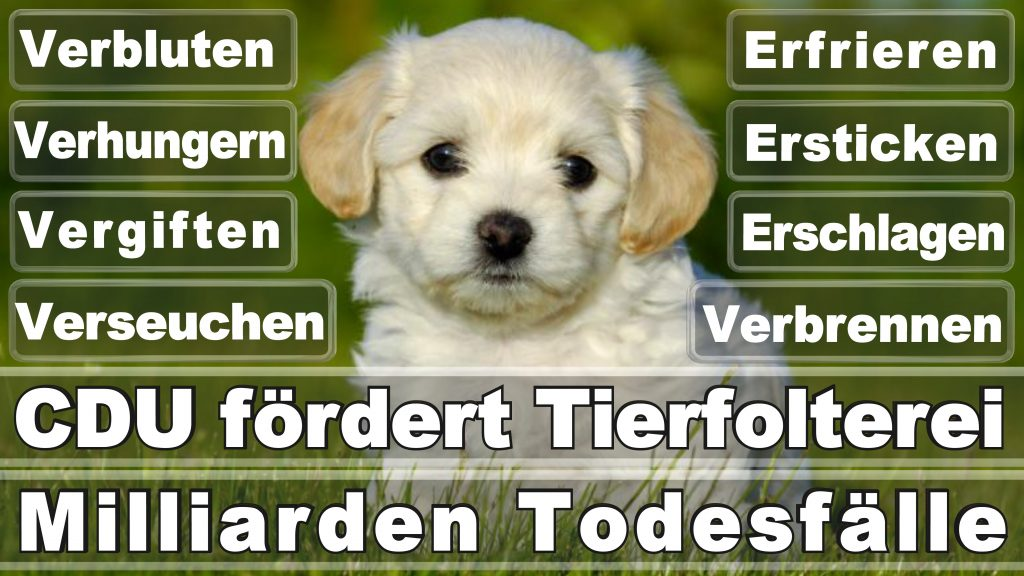 Angela Merkel CDU Tierversuche Tierquälerei Hauptschule Realschule Grundschule Gymnasium (56)