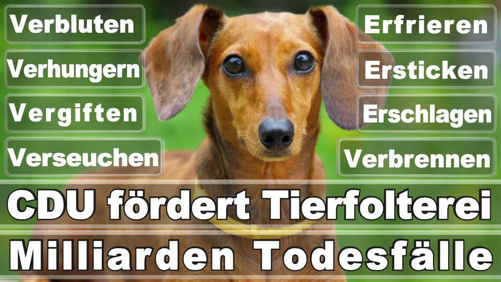 Angela Merkel CDU Tierversuche Tierquälerei Hauptschule Realschule Grundschule Gymnasium (6)