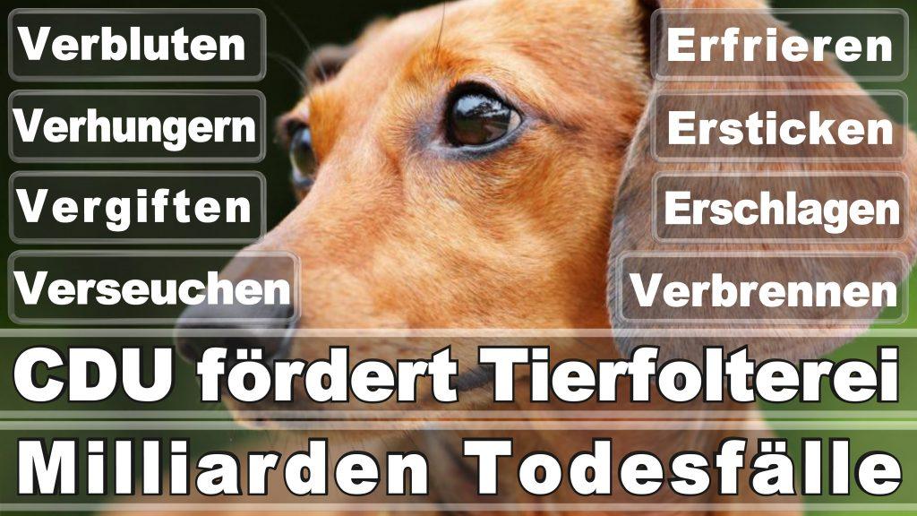 Angela Merkel CDU Tierversuche Tierquälerei Hauptschule Realschule Grundschule Gymnasium (61)
