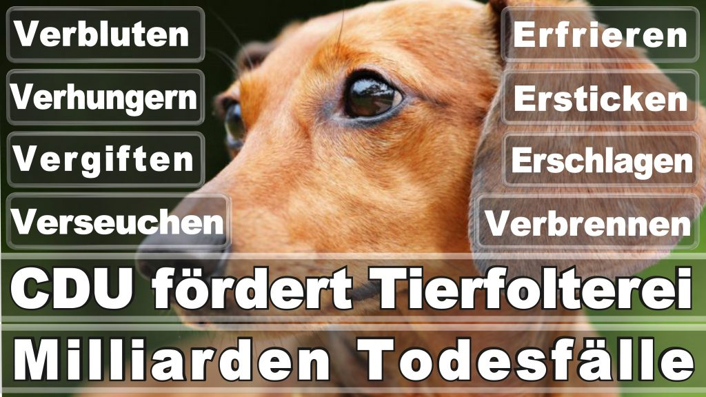 Bundestagswahl 2017 Umfrage Stimmzettel Angela Merkel CDU Tierversuche Tierquälerei Hauptschule Realschule Grundschule Gymnasium (9)